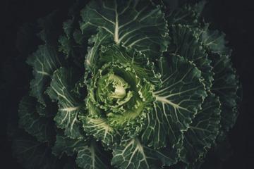 Kale: Love It!