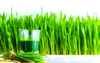Amazing Wheatgrass: What Is It, and Why You'll Love It!